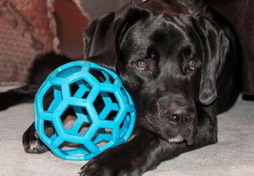 Quel cadeau offrir à son chien pour son anniversaire ?