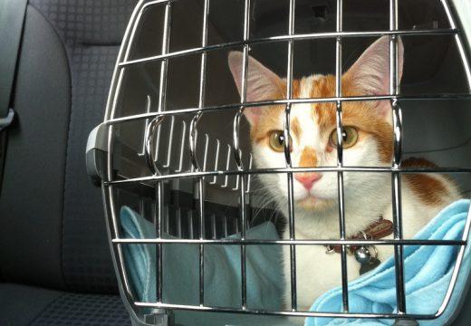 Quels cadeaux offrir pour l'adoption d'un chaton ?